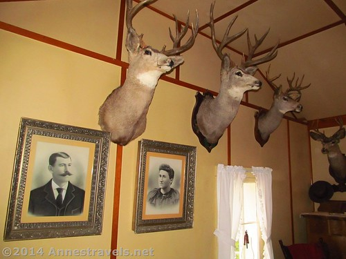 Mounted deer heads and family portraits in the Holzwarth Home of the Holzwarth Historic Site, Rocky Mountain National Park, Colorado