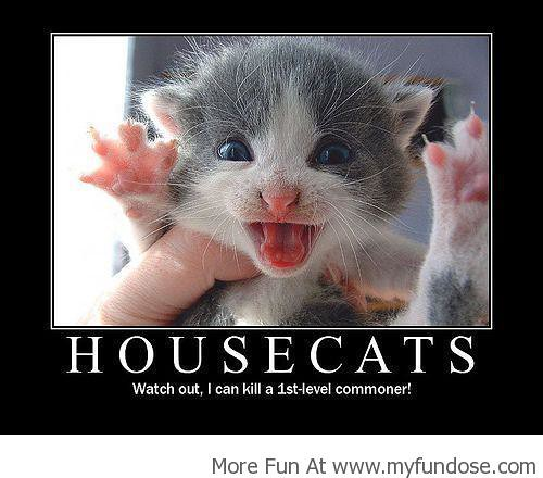 Best Funny Images & Memes,Funny Photos & Pictures| House Cats!
