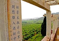 El Vino en China: producción, tipos de uva, y clasificación