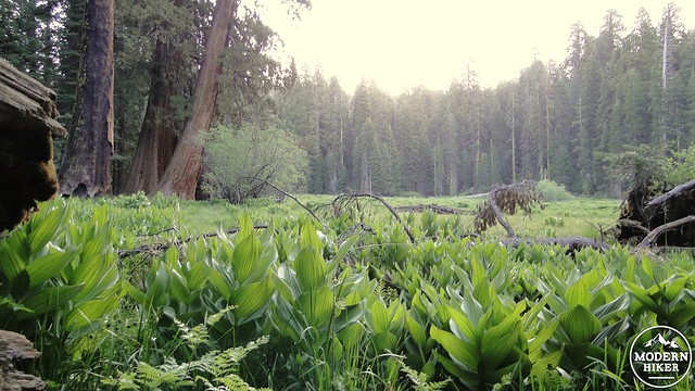 Log Meadow