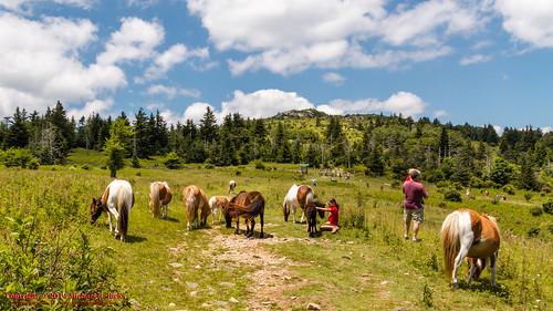 usa geotagged virginia unitedstates hiking wildlife backpacking ponies millcreek appalachiantrail mouthofwilson graysonhighlandsstatepark mountrogersnationalrecreationarea canon7d sigma18250mmf3563dcmacrooshsm geo:lat=3664130460 geo:lon=8151597020