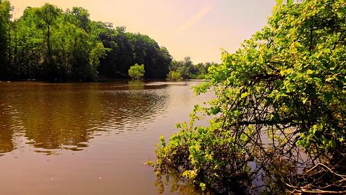 Water along Hines Drive, Livonia MI 48150 DSCF3945pmpa