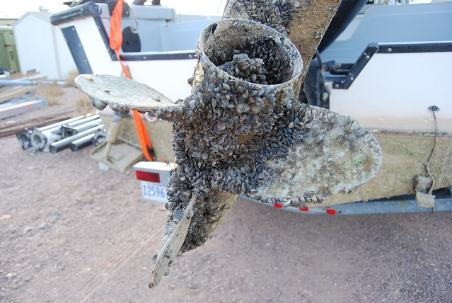 Aquatic Invasive Species: Mussel fouled propeller from Lake Mead, Arizona