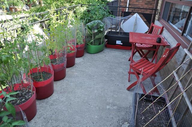 garden, July 21