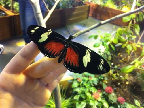 Butterfly on His Hand