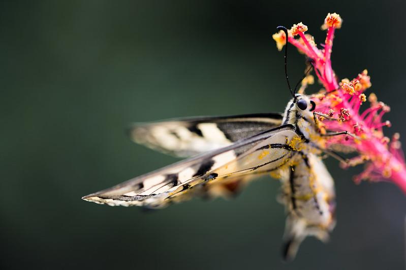 Le mie macro ( con Sigma 105 f/2.8 ) : insetti e non solo ... 14561351369_b8844b6774_c