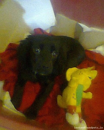 [Reunited] Tue, Jul 22nd, 2014 Lost Female Dog - R423, Laois