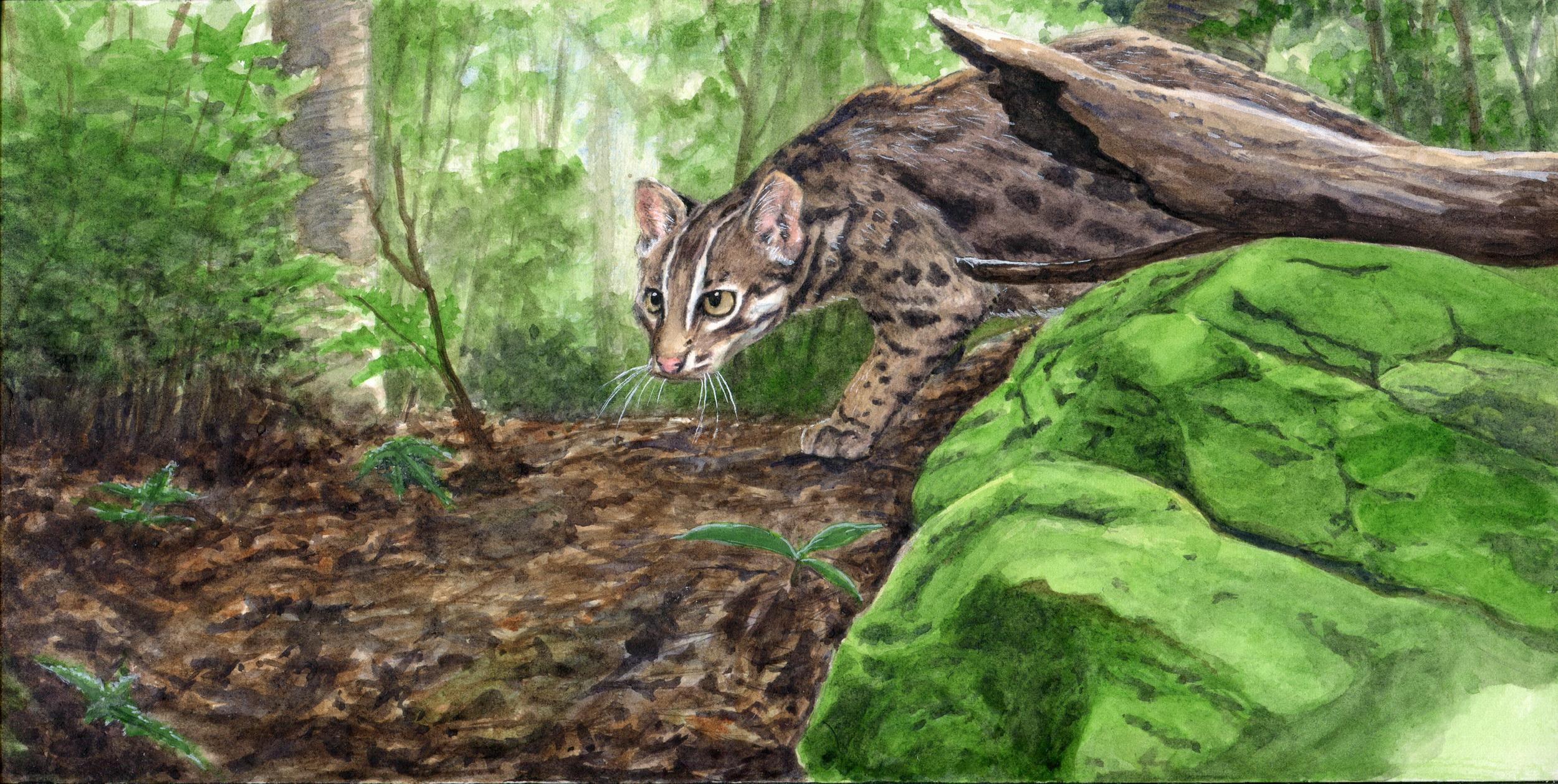 林家蔚先生的「石虎森林」。(圖片來源:林務局)