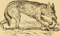 """Image from page 65 of """"The argonauts of 'forty-nine, some recollections of the plains and the diggings"""" (1894)"""