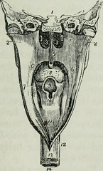 """Image from page 76 of """"Human physiology"""" (1856)"""