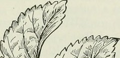 "Image from page 312 of ""The American educator; completely remodelled and rewritten from original text of the New practical reference library, with new plans and additional material"" (1919)"