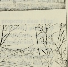 "Image from page 640 of ""The Pennsylvania-German Society : [Publications]"" (1891)"