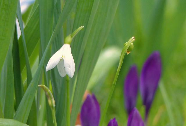 La clochette blanche - The white bell
