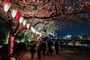 Hanami on the Sumida River