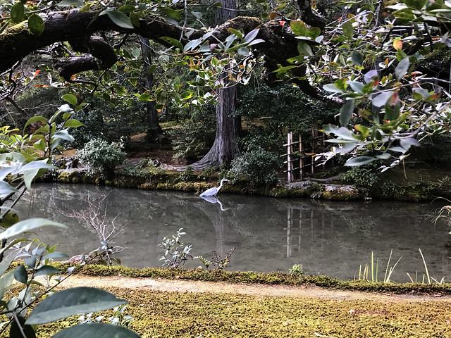 A Stork at Kinkaku-Ji Temple
