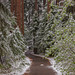 Snowy Tree-Lined Path by Jeffrey Sullivan