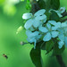 Small photo of Abeille