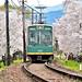 桜のトンネル by Jennifer 真泥佛