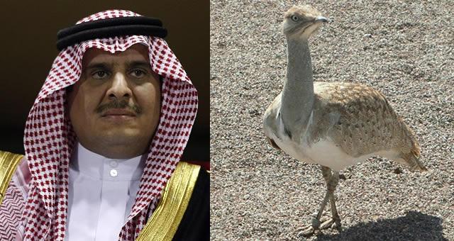 saudi-diarioecologia