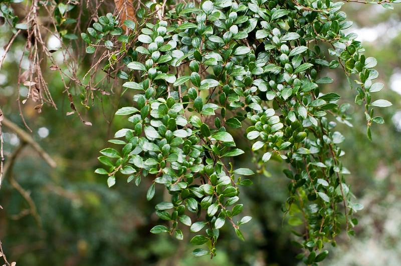 Foliage-4