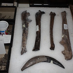 Vertebrate Paleontology Collection
