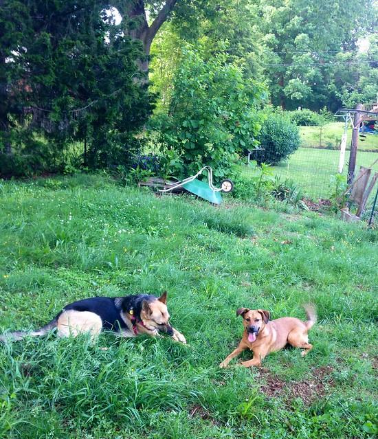Pyrrha and Fiona get to play