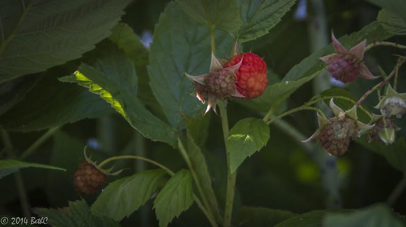 146/365 Berry Goodness