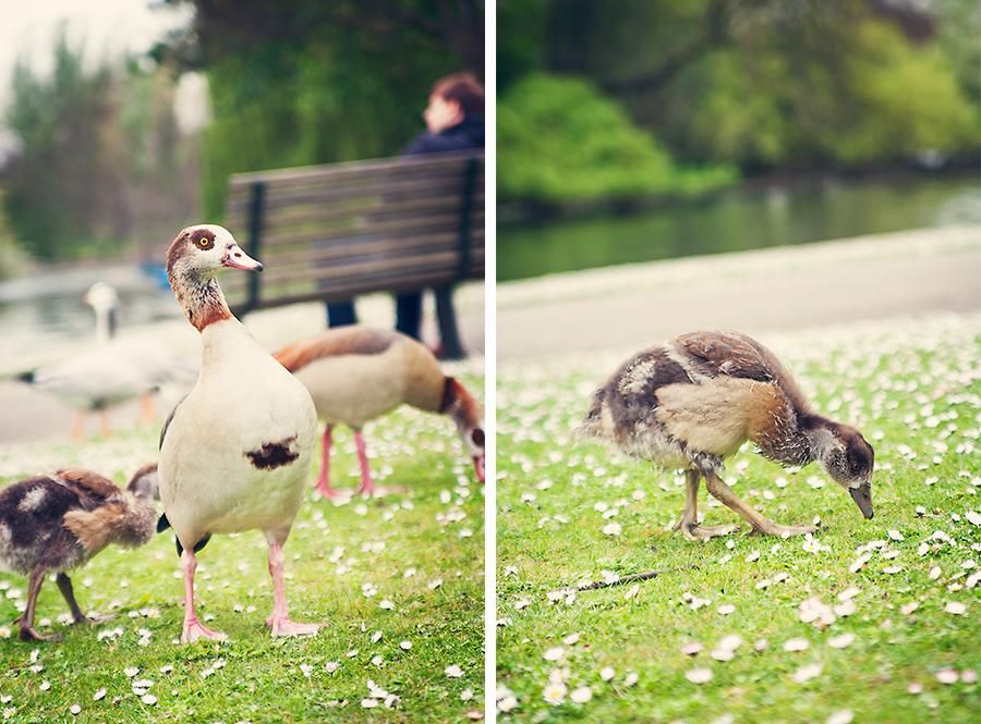 London-bird