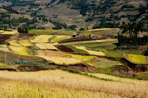voyage africa travel nature field yellow horizontal jaune work landscape nikon colours view couleurs champs travail getty paysage vue lalibela afrique eastafrica dégradé parcelle afriquedelest champsdeblé cultureenterrasse terraceculture ethiopiedunord norhernethiopia