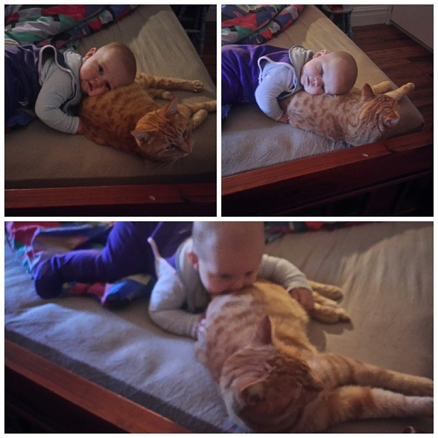 Have I ever told you about how much #babyjagoe loves cats?