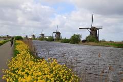 Kinderdijk, South Holland 060