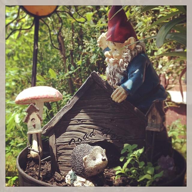 Little Builder -- #inthegarden #fairygarden #gnome #hedgeh