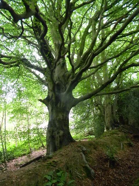 Nice tree 3