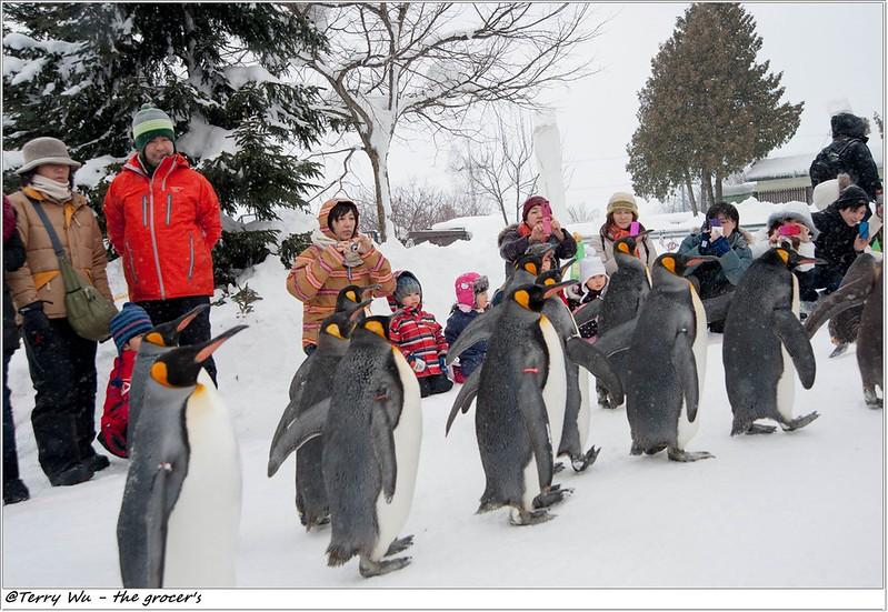 Day5 - 旭山動物園 - 企鵝散步-69