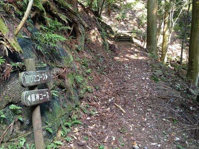 釜ヶ谷山 山びこコース・龍神コース分岐