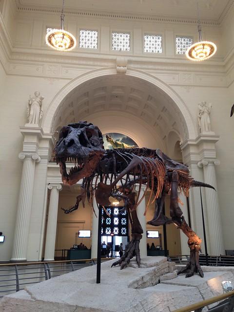 Field Museum - Sue the T-Rex
