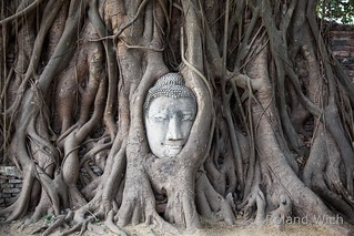 Ayutthaya - Buddha Head in Tree Roots