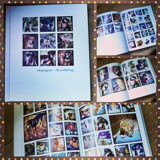 Just received my first #PrintStudio book of Instagram pics and LOVE it! #dogstagram #love #SocialPS #book #WhatToDoWithYouInstagramPics