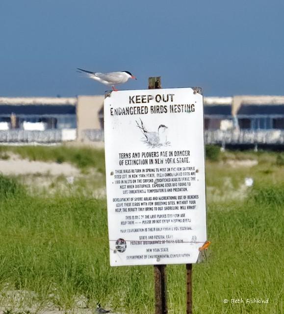 Nickerson Beach Long Island