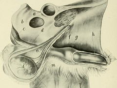 """Image from page 139 of """"Animal castration, a book for the use of students and practitioners;"""" (1914)"""