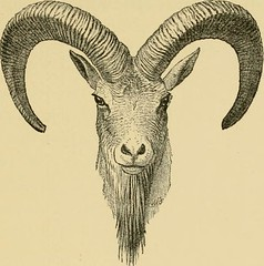 "Image from page 226 of ""Horn measurements and weights of the great game of the world: being a record for the use of sportsmen and naturalists"" (1892)"