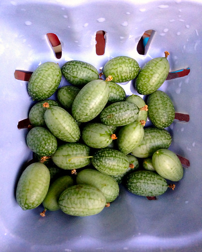 Sour Mexican Gherkins
