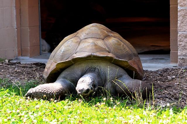 Sunning tortoise