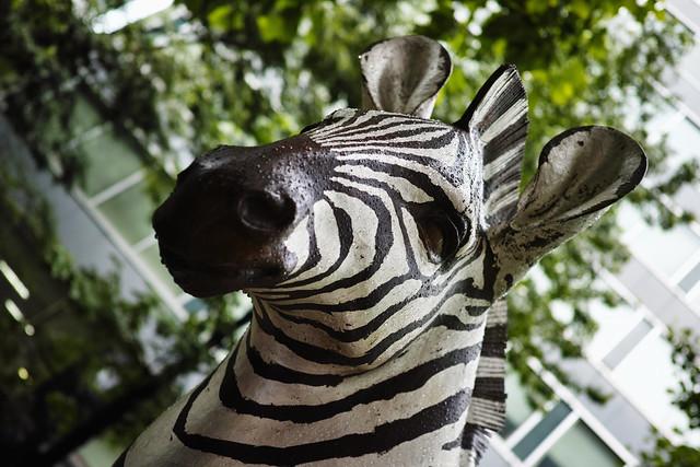 20140714_04_Zebra