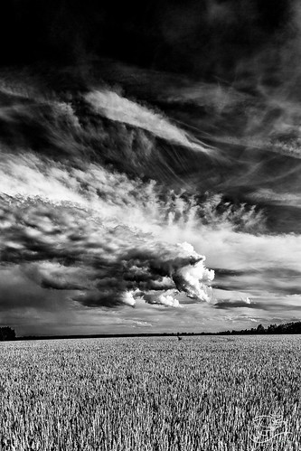 trees sky canada storm clouds canon grain alberta fields