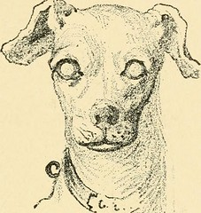 "Image from page 457 of ""Diseases of the dog and their treatment"" (1911)"