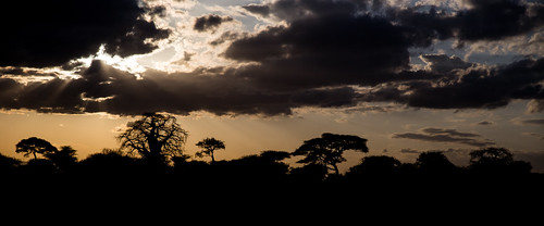 africa trees sunset sun clouds landscape tanzania natural naturallight safari tarangire tarangirenationalpark slüet sluiette