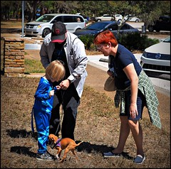 2017-03-11_P3110101_PCAS  Bark in the park (puppies) Walsingham Park