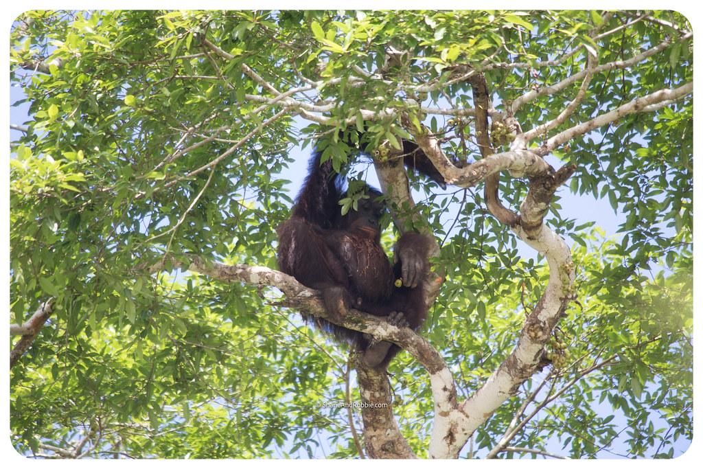 Borneo-20170411-_MG_7574