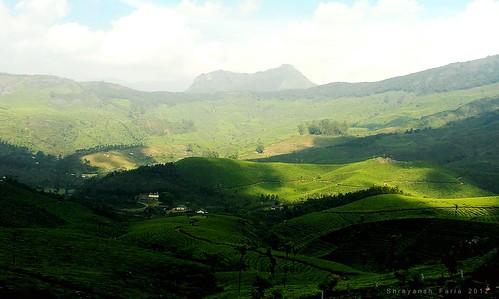 green lush tea plantation gardens valley hills mountains lit shades shadows nature landscape